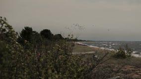 En flock av fåglar som cirklar ovanför stranden stock video