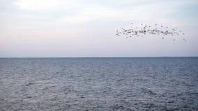 En flock av fåglar som flyger på havshorisonten på solnedgången över stadigt vatten med inga vågor lager videofilmer