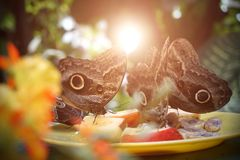 En flock av fjärilar som äter frukt i reserven Närbild arkivfoton