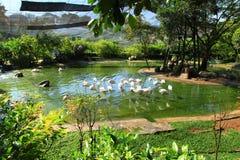 En flock av flamingo på en grön sjö som omges av träd och gräs arkivbild