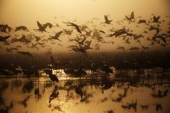 En flock av flyttfåglar på sjön royaltyfria bilder