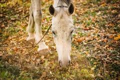 En flock av fotograferade hästar Djuret omges av grässlättar som är fulla av blommor och härligt nytt grönt gräs fotografering för bildbyråer