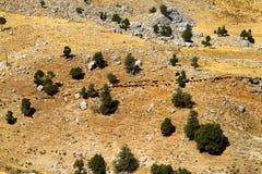En flock av getter i dalen royaltyfri foto