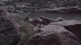 En flock av getter nära floden stock video
