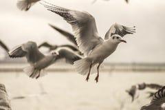 En flock av seagulls Arkivbilder