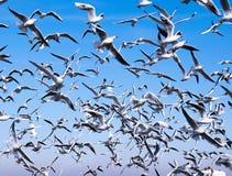 En flock av seagulls royaltyfri foto