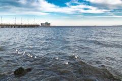 En flock av seagulls på havet arkivfoton