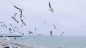 En flock av seagulls på havsstranden Ultrarapidnärbildskott En flock av lösa fåglar över stranden arkivfilmer