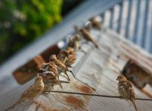 En flock av sparven sitter p? en tr?d fotografering för bildbyråer