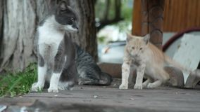 En flock av tillfälliga katter i en sommar parkerar 4K stock video