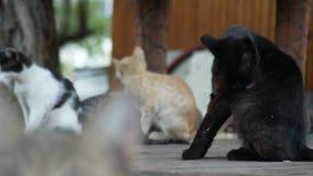 En flock av tillf?lliga katter i en sommar parkerar 4K stock video