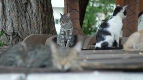 En flock av tillf?lliga katter i en sommar parkerar 4K lager videofilmer
