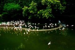 En flock av vita fåglar fotografering för bildbyråer