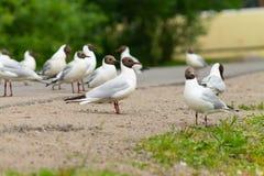 En flock av vita seagulls som sitter på kusten arkivfoto