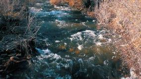 En flod flödar tillsammans med avlövade träd i en härlig plats i höst lager videofilmer