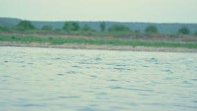 En flod i aftonen är ett idealt ställe för att fiska arkivfilmer