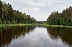 En flod i bakgrunden av en skog Royaltyfria Bilder