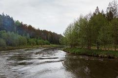 En flod i bakgrunden av en skog Arkivbild