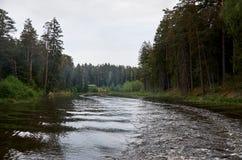 En flod i bakgrunden av en skog Royaltyfri Foto
