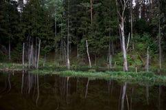 En flod i bakgrunden av en skog Royaltyfri Bild