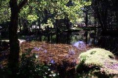 En flod i Villasrubias (Salamanca) 01 Arkivfoton