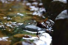 En flod, lugna och fridsamt royaltyfri foto