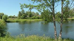 En flod med en sumpig kust i en solig middag för sommar I avståndet kan du se byn lager videofilmer