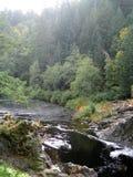 En flod och en skog i Sooke, Kanada Royaltyfri Fotografi