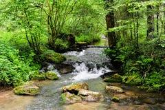 En flodplats från de härliga trekking banorna av Ardennes område Royaltyfri Foto