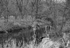 En flodvisningnedgång i Midwesten royaltyfri foto