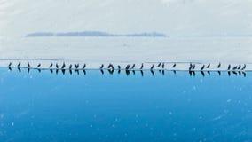 En flolck av fåglar på isen Royaltyfri Foto