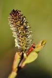 En fluffig blomma royaltyfria foton