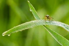 En fluga i morgonen som täckas med daggdroppenärbild Arkivbilder