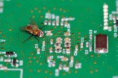 En fluga på ett strömkretsbräde Royaltyfria Bilder