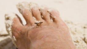 En fluga på en fot för man` s lager videofilmer