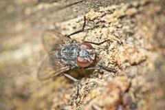 En fluga sitter på treeskäll på vilar. Makroskytte Fotografering för Bildbyråer