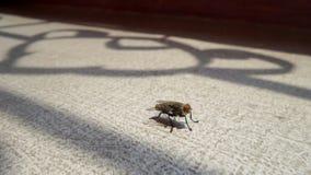 En fluga under skugga för järnensemblefönster Arkivfoto
