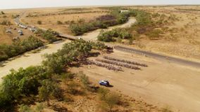En flyg- sikt av träd och en lång väg lager videofilmer