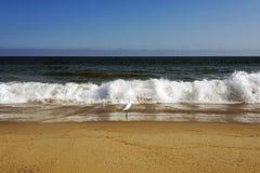En flygseagull över vågorna i havet i Malibu, Los Angeles, USA I SOMMARTID Arkivbild
