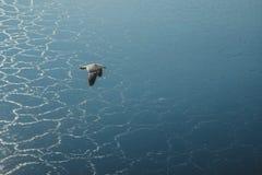 En flygSeagull royaltyfri foto