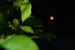 En-foco verde Imagen de archivo libre de regalías