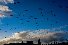 En folkmassa av fåglar i Lissabon, Portugal Arkivfoton