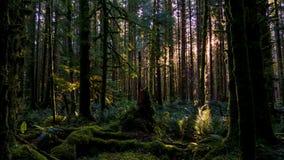 En Forest Dawn royaltyfria foton