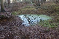 En Forest Pond With ett stupat träd inom Royaltyfri Bild
