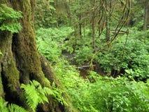 En Forest Scene Royaltyfri Foto