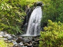 En Forest Stream Royaltyfria Foton