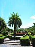 En formell trädgård Arkivbilder