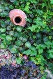 En forntida kanna på jordningen, i sidor av växter royaltyfria foton
