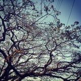 En forntida tree Royaltyfria Foton