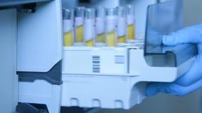 En forskare i ett laboratorium förlägger provrör med blod eller urin i behållaren av en termisk analysator arkivfilmer